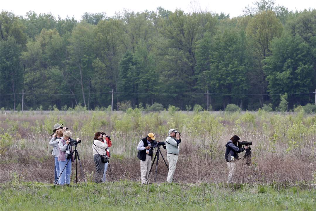 Birders-Pearson-Metropark-North-Wetland-Mitigation-Bank