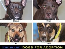 Dogs-for-Adoption-13-05-10-jpg