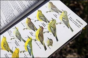 Martin McAllister has used this book to identify birds for decades. 'The Biggest Week in American Birding' festival is said to be designed for beginners.