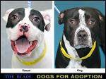 Dogs for adoption: Rascal and King.