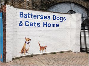 Battersea Dogs and Cats Home has been rescuing, reuniting, and finding new homes for dogs and cats in England since 1860.