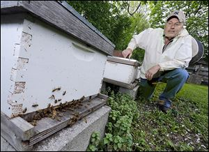 Dan Bollett, a beekeeper from Waterville, inspects the progress of a hive at the 577 Foundation in Perrysburg.