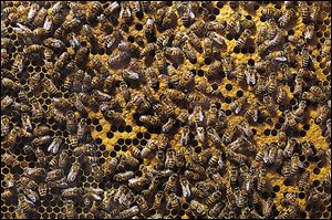 Besides the challenges of winter, bees face other foes, including  mites and chemicals.