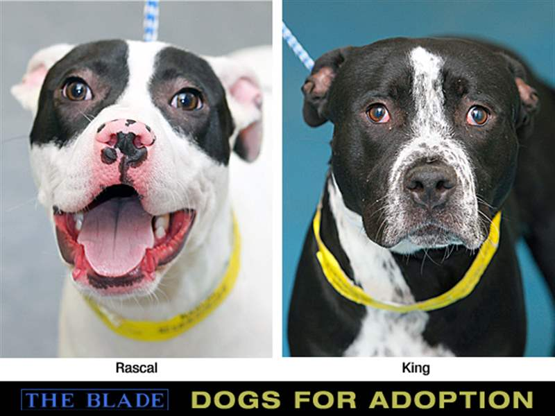 Rascal-and-King-dogs-for-adoption