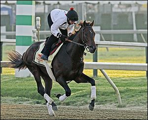 Jennifer Patterson gallops Kentucky Derby winner Orb at Pimlico. Orb could go off as an even money favorite to win the Preakness.