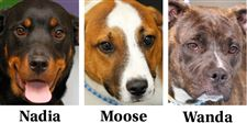 Dogs-for-adoption-5-18