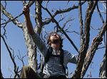 Ethan Welty, co-founder of the urban foraging website fallingfruit.org, climbs a tree looking for edible fruit, at a public park, in Boulder, Colo.