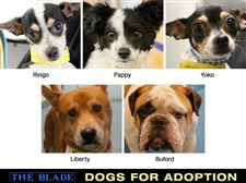 dogs-for-Adoption-5-25-2013