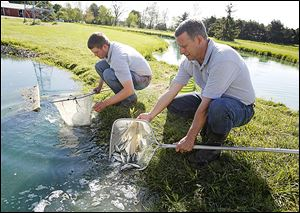 Ben Gerken, left, and Bob Hesterman release largemouth bass into a pond at the Fin Farm in Ridgeville Corners, Ohio, after having netted them from another pond.