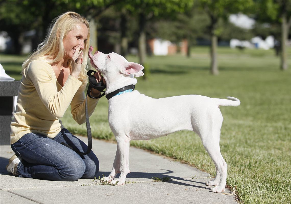 Deaf Dog Learning Sign Language Commands Toledo Blade