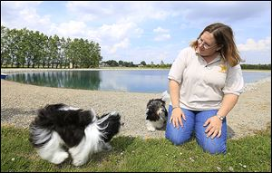 Marcy Skirvin plays with her Havanese dogs, Tux and Cinder, at her home in Bowling Green.