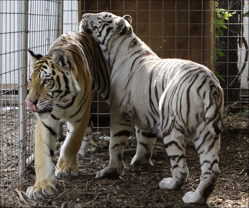 ownership of exotic animals The first i heard about wednesday's disaster in zanesville, ohio, which left 49 exotic animals dead after they were released from a private facility, was when i.