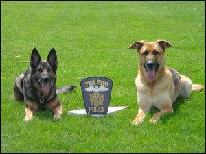 Danja and Bella, retired Toledo Police Metro Drug Task Force Canine Unit dogs,  who both died in the past three weeks.