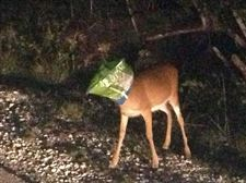 Deer-Doritos-Bag-Florida-Keys