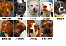 dgos-for-adoption-June-12