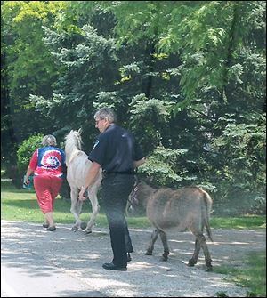 Oregon Assistant Police Chief Paul Magdich has the donkey in custody while Kathy Holter of Oregon, owner of the animals, takes charge of the horse.