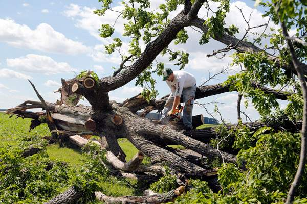 Brandon-Rosebrook-removes-a-downed-tree-from-his-grand
