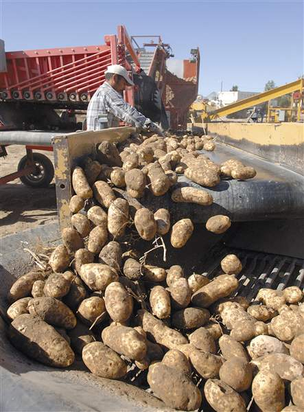 Food-and-Farm-Potato-Lawsuit