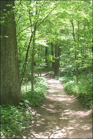 A trail in Oak Openings Preserve.