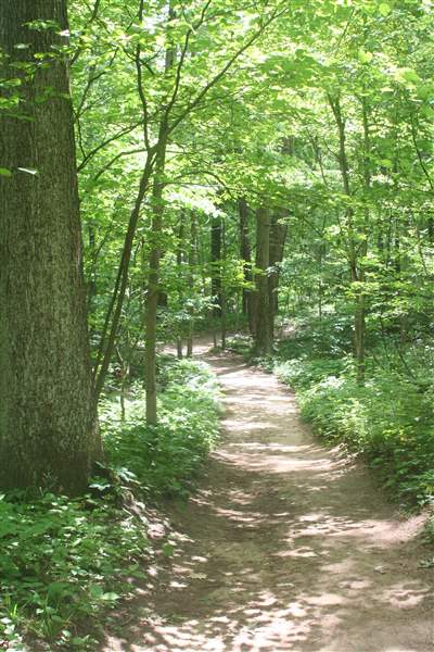 Oak-Openings-Preserve-trail