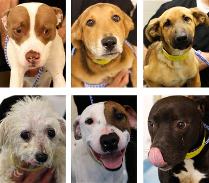 dogs-for-adoption-26