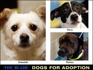 Lucas County Dogs for Adoption: June 29, 2013