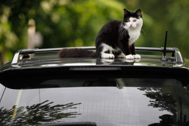 CTY-cats27p-cat-on-car