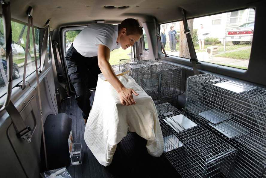 CTY-cats27p-cat-traps-in-van
