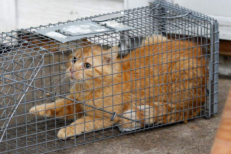 CTY-cats27p-unhappy-cat-in-cage