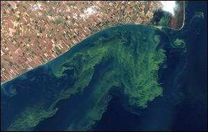 A satellite photo from a NASA website that shows algae blooms swirling on Lake Erie. A significant blue-green algae bloom in Western Lake Erie this summer could hurt tourism.