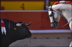 One horse of Spanish mounted bullfighter Pablo Hermoso de Mendoza, looks at the bull during a horseback bullfight at San Fermin Fiestas, in Pamplona, northern Spain on Saturday.