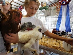 Conor Dean, 14, of Maumee, reaches back for the opening of the pen for his Silkie chicken as he and his sister, Brianagh Dean, 12, left, man their pens. The pair were showing a number of different types of chickens.
