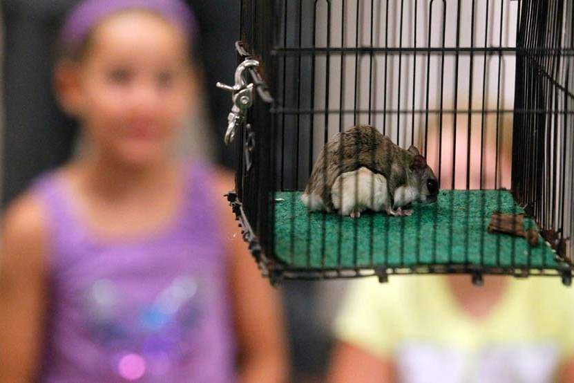 animal-camp-flying-squirrel