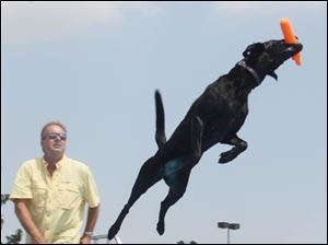 J.D. McKnight of West Milton, Ohio, watches as his black lab Storie catches his toy with a 26-foot, 2-inch jump. Storie is the 2012 Ultimate Air Dogs National Champion.