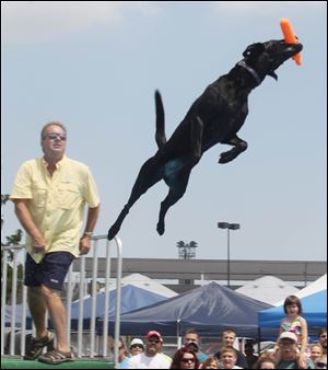 J.D. McKnight of West Milton, Ohio, watches as his black lab Stori launches from the platform. Storie went the farthest Sunday, soaring 26 feet, 2 inches.