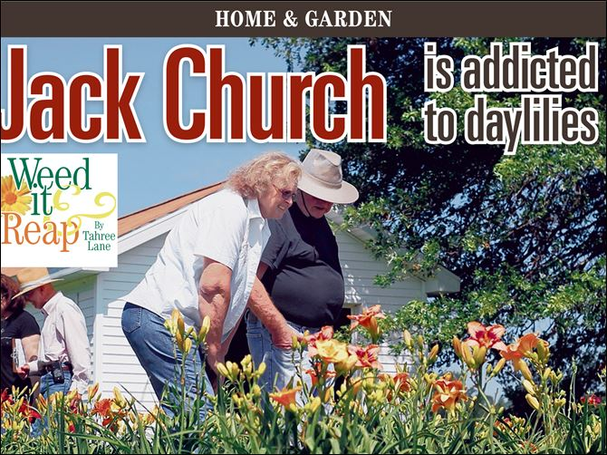 2013071700000000000 Jack Church is addicted to daylilies