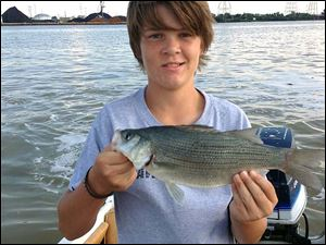 Ben Carter, 13, holds a 2.1-pound white bass he caught while fishing on the Maumee Rive downtown. Ben and his father, Chris, caught 40 white bass in about an hour.