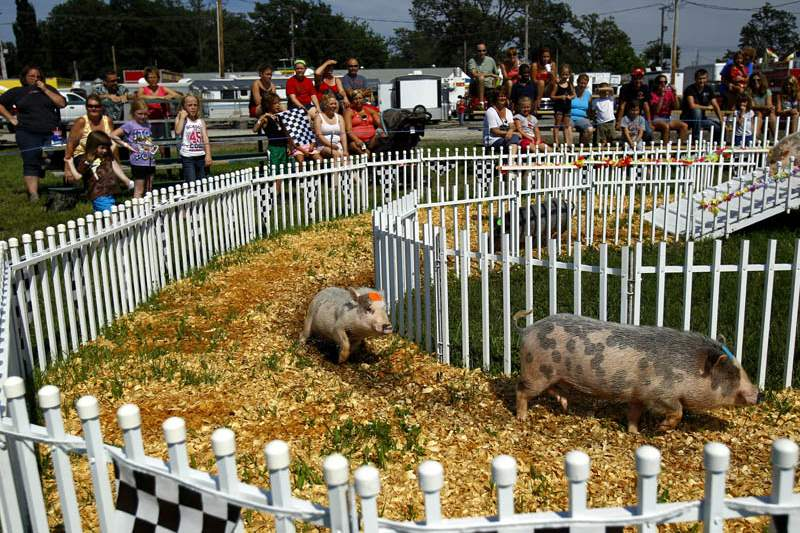 Ottawa-County-Fair-pig-race