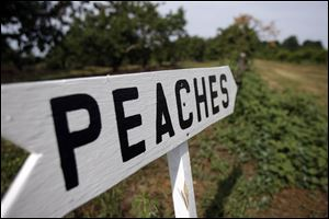 A bright sign points the way to the ripest peaches for people to pick at Erie Orchards on July 22, 2010 in Erie, Michigan.