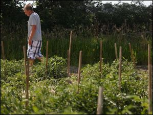 Trevin strides past the rows of tomatoes growing in his garden on his father's land in Woodville. Haar planted his rows about six feet apart so he could use his vehicle between the rows.