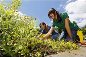 Lin Xia Huang, 22, of China, left, and Caroline Dewi, 24, of Indonesia work together under sunny skies in Toledo.