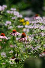 A-purple-coneflower-left-with-wild-bergamot