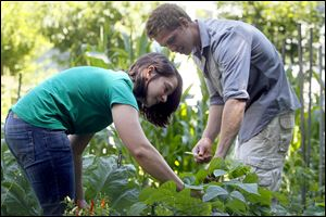 Former WWOOF member Kaitlyn Bailey of Dayton and current WWOOF member Sean Smith pick beans on City Councilman Steven Steel's cropland, an oasis in the middle of the Old West End.