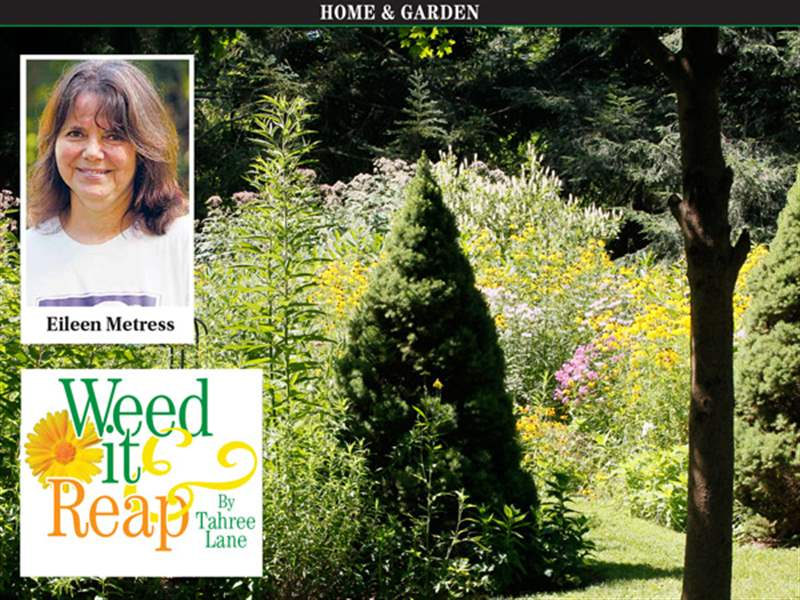 Weed-It-And-Reap-Eileen-Metress