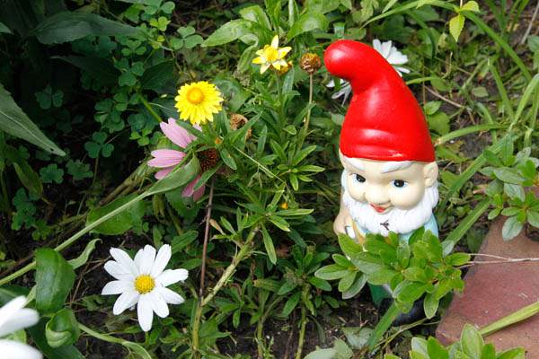 WIAR-Sharkey-gnome