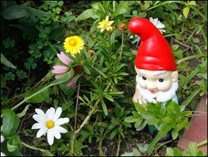 This gnome was given to John Sharkey by his brother Charlie.