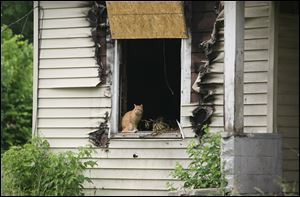 A feral cat lounges in the window of a burned-out home in Toledo. Fe­ral or stray cats should never be in­tro­duced into a new home with­out ap­pro­pri­ate test­ing for con­ta­gious dis­eases and in­tes­ti­nal par­a­sites.