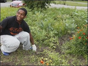Charles Moss, 17, a senior at Woodward H.S., weeds around tomatoes at the garden.