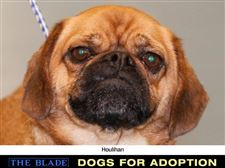 Lucas-County-Dogs-for-Adoption-8-12