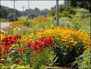 Flowers in Cheryl Metro's 1,000 ft. roadside garden in Delta.